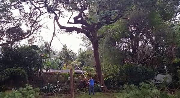 How to Use an Electric Pole Chainsaw